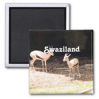 Swaziland Magnets