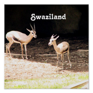 Swaziland Print