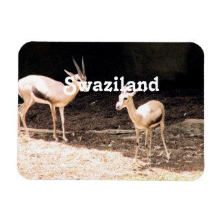 Swaziland Rectangular Magnet