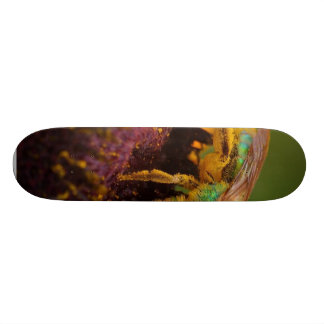 Sweat Bee At The Del Mar Fairgrounds Skate Boards