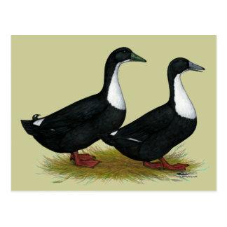 Swedish Ducks Black Postcard