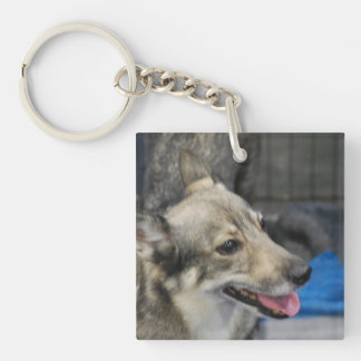 swedish-vallhund-2.jpg key ring