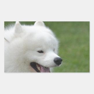 Sweet American Eskimo Dog Rectangular Stickers