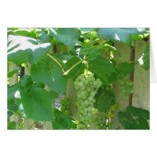 Sweet and Juicy White Seedless Grapes Card