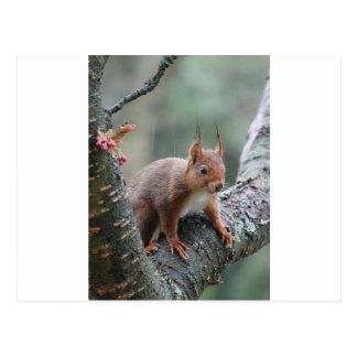 Sweet Animal Postcard