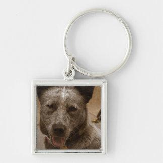 Sweet Australian Cattle Dog Key Chain