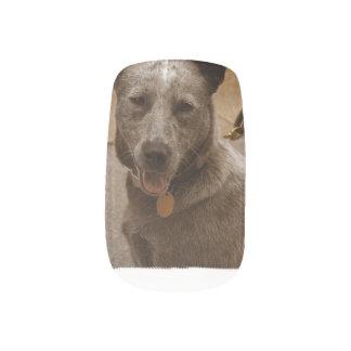 Sweet Australian Cattle Dog Minx ® Nail Wraps