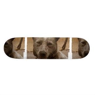 Sweet Australian Cattle Dog Skateboard Decks