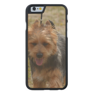 Sweet Australian Terrier Carved Maple iPhone 6 Case