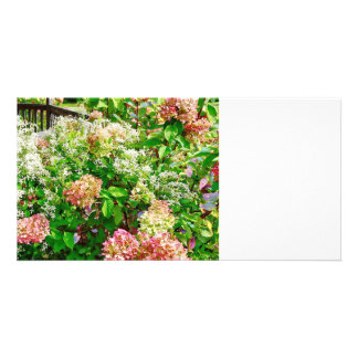 Sweet Autumn Clematis and Pink Hydrangea Photo Greeting Card