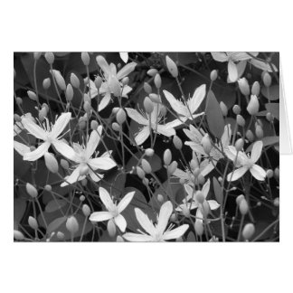 Sweet Autumn Clematis Card