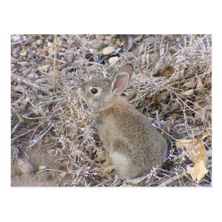 Sweet Baby Bunny Postcard