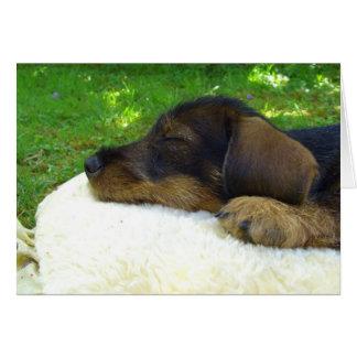 Sweet Baby - cute Dachshund puppy Greeting Card