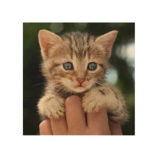 Sweet Baby Kitten Wood Wall Art