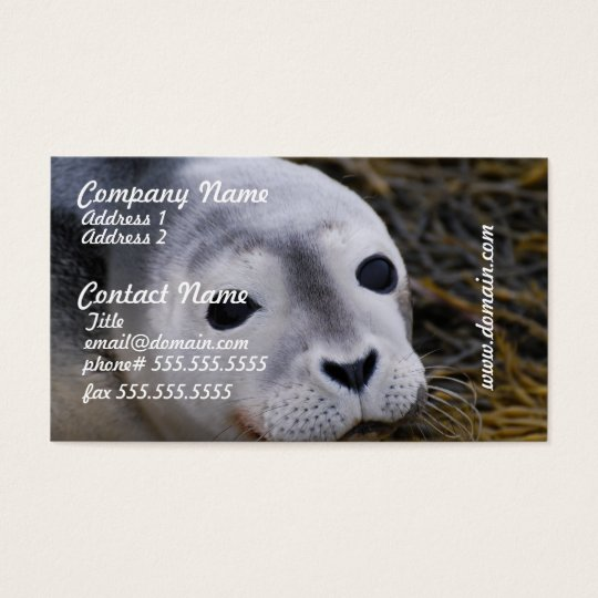 Sweet Baby Seal Business Cards