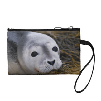 Sweet Baby Seal Coin Purse