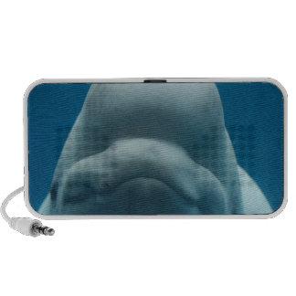 Sweet Beluga Whale Speakers