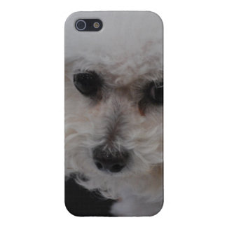 Sweet Bichon Frise iPhone 5/5S Cover