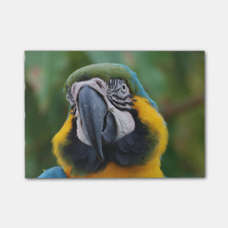 Sweet Blue and Gold Macaw Post-it® Notes
