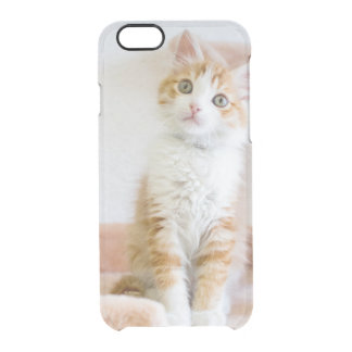 Sweet Blue Eyed Kitty Clear iPhone 6/6S Case