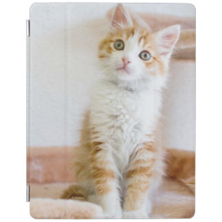 Sweet Blue Eyed Kitty iPad Cover