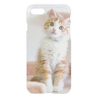Sweet Blue Eyed Kitty iPhone 8/7 Case