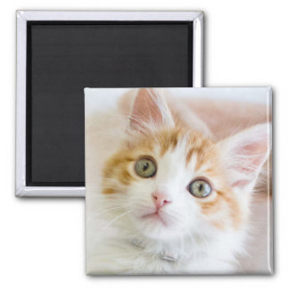 Sweet Blue Eyed Kitty Square Magnet