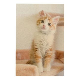 Sweet Blue Eyed Kitty Wood Print