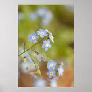 Sweet Blue Flowers Posters