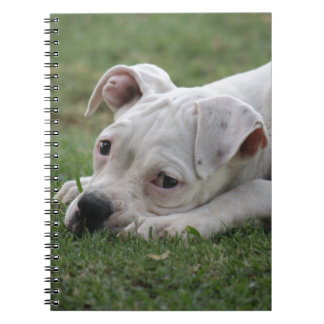 Sweet Boxer Puppy Notebook