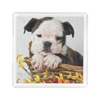 Sweet Bulldog Puppy