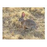 Sweet Bunny Postcard