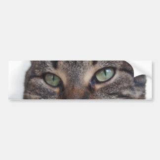 Sweet Cat Green Eyes Portrait, Pet Domestic Animal Bumper Sticker