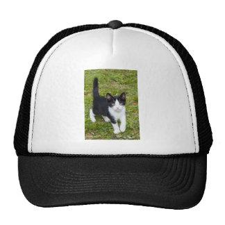 Sweet Cat Hats