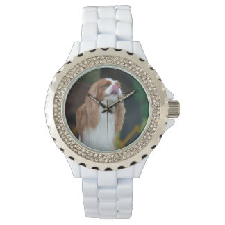 Sweet Cavalier King Charles Spaniel Watch