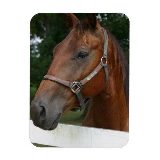 Sweet Chestnut Horse Flexible Magnet Rectangular Magnet