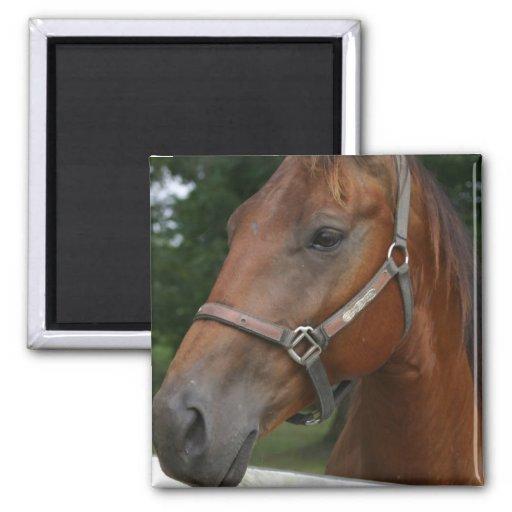 Sweet Chestnut Horse Magnet Refrigerator Magnet