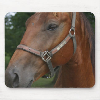 Sweet Chestnut Horse Mouse Pad