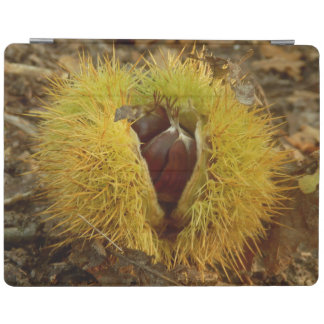Sweet Chestnut iPad Cover