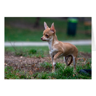 Sweet Chihuahua Puppy Gundog Wannabe Card