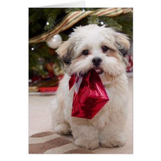 Sweet Christmas Puppy Cards