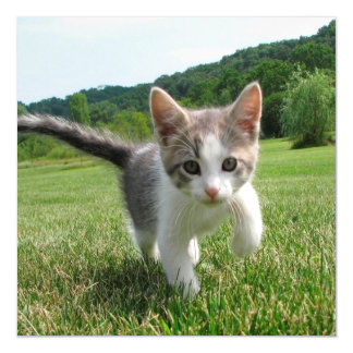 Sweet Cute Cat Magnetic Invitations