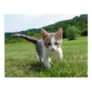 Sweet Cute Cat Postcard