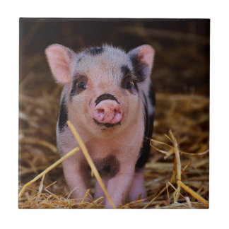 Sweet Cute Pig Tile
