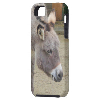 Sweet Donkey, Animal Grey, Horse Family iPhone 5 Covers