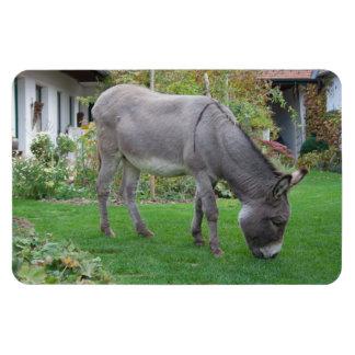 Sweet Donkey In The Garden Rectangular Photo Magnet