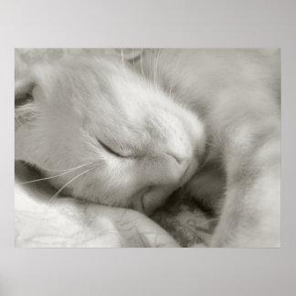 Sweet Dreams - poster