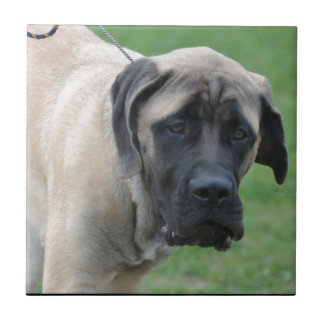 Sweet English Mastiff Tile