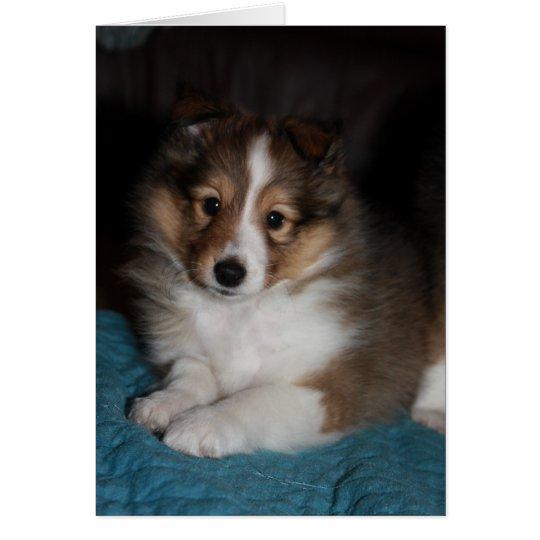 Sweet Face Sheltie (Shetland Sheepdog) Puppy Card