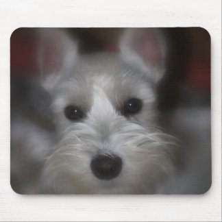 Sweet Face White Schnauzer Puppy Mouse Mat